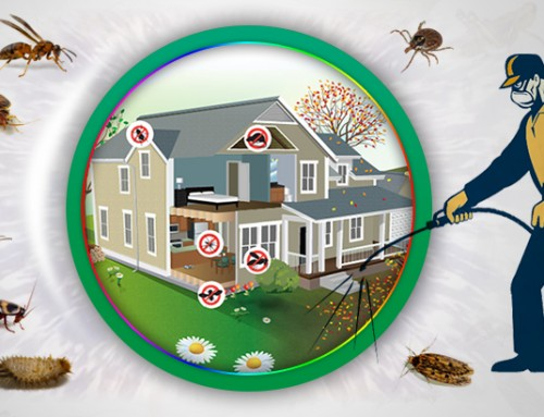 شركة مكافحة الحشرات ابوظبي |0523353369 |متميزون