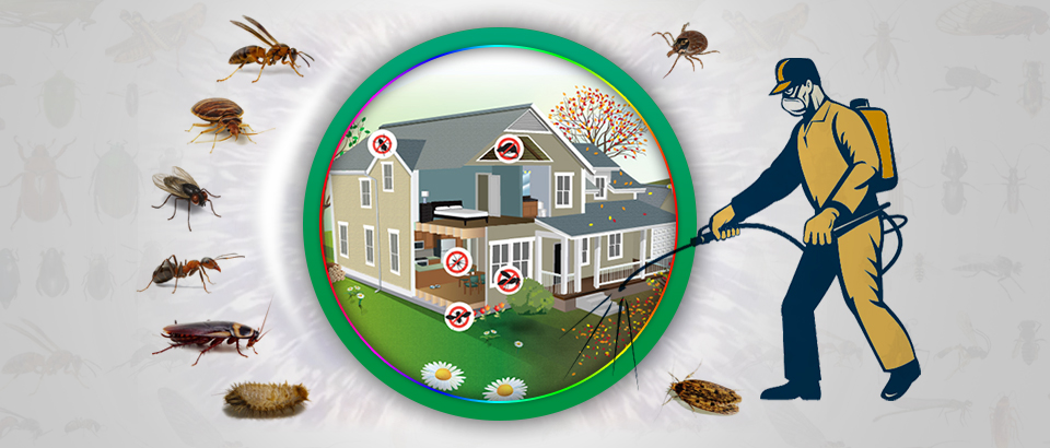 شركة مكافحة الحشرات ابوظبي