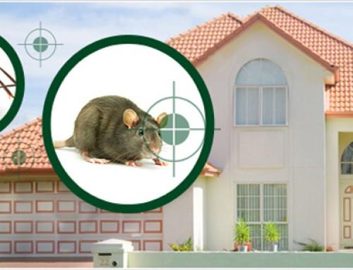 شركة مكافحة الحشرات دبي |0523353369 | ابادة الحشرات