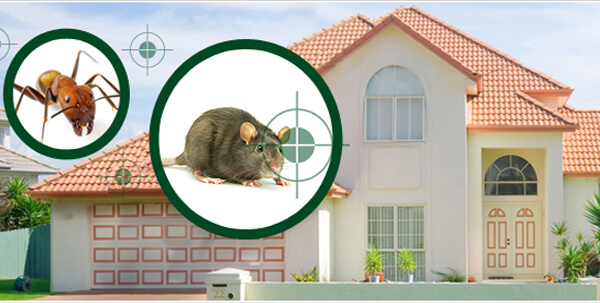 شركة مكافحة الحشرات دبي
