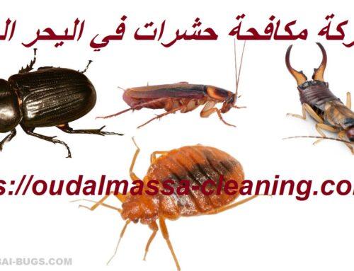 شركة مكافحة حشرات في اليحر العين  0523353369  رش حشرات