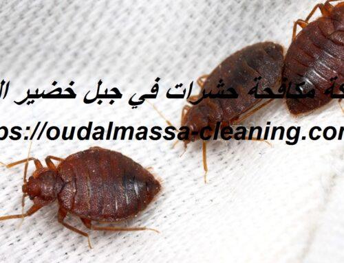 شركة مكافحة حشرات في جبل خضير العين  0523353369  رش حشرات